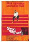 Sweet Bird Of Youth (1962).jpg